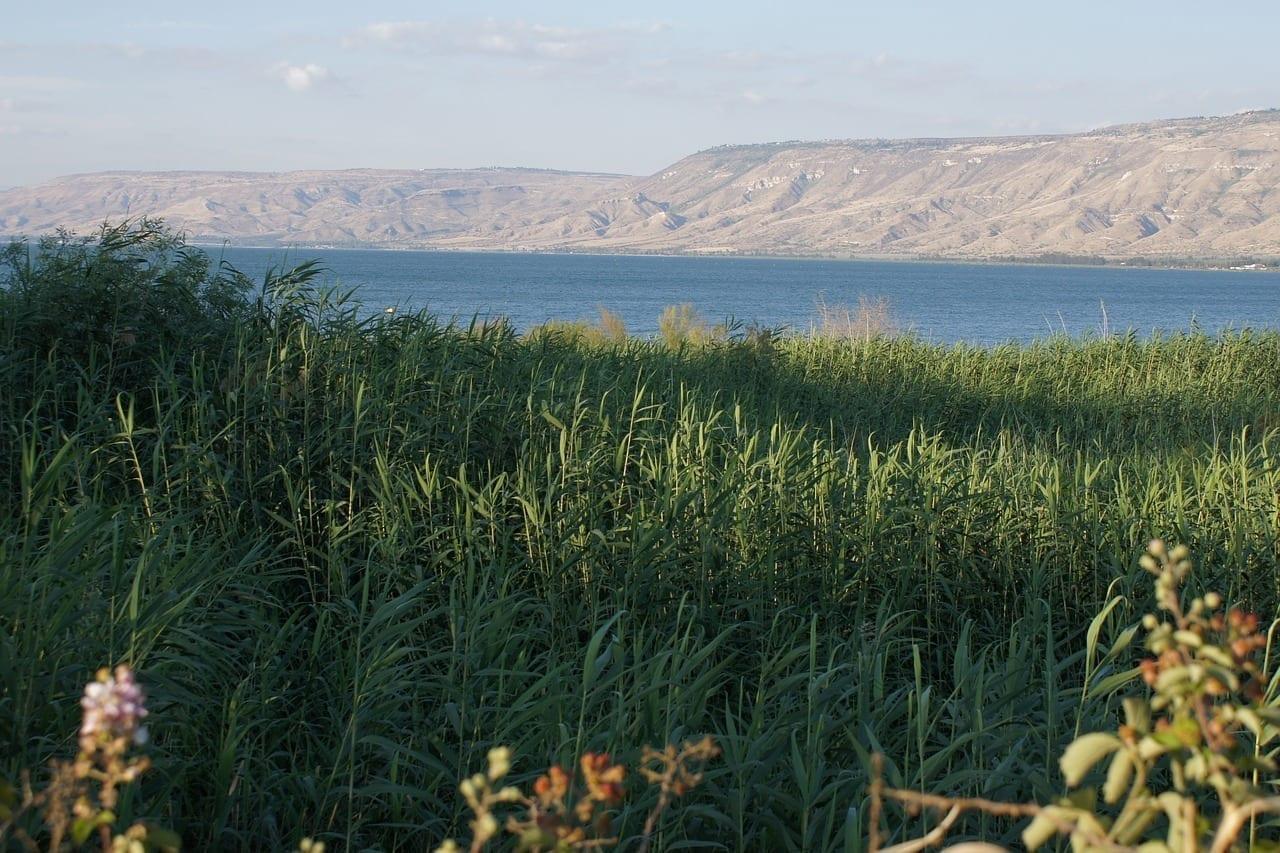 Mar De Galilea Lago Caña Israel