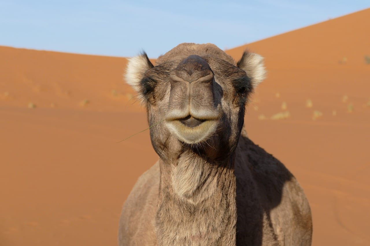 Merzouga Marruecos áfrica Marruecos