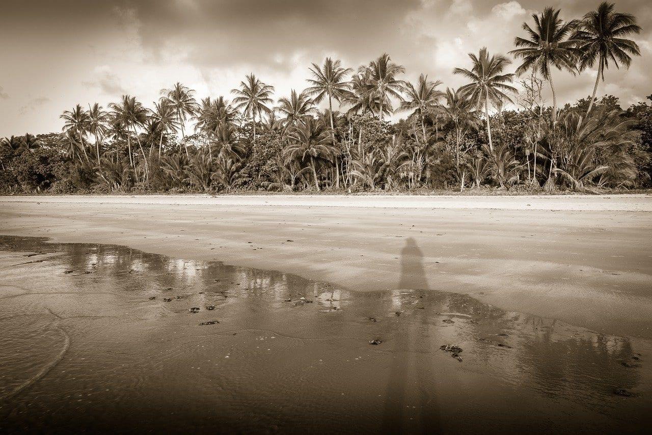 Mission Beach Australia Palmeras Australia