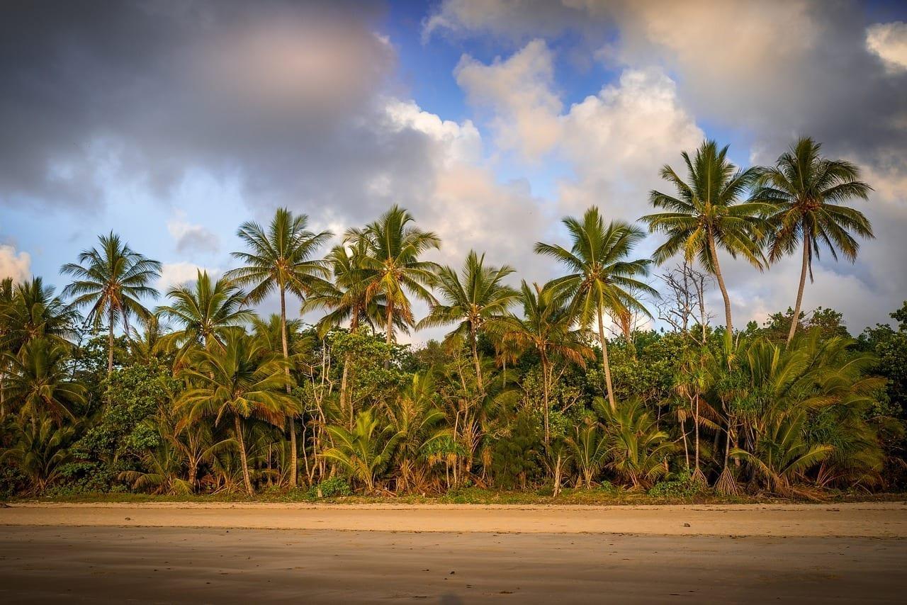 Mission Beach Australia Palmeras Canadá