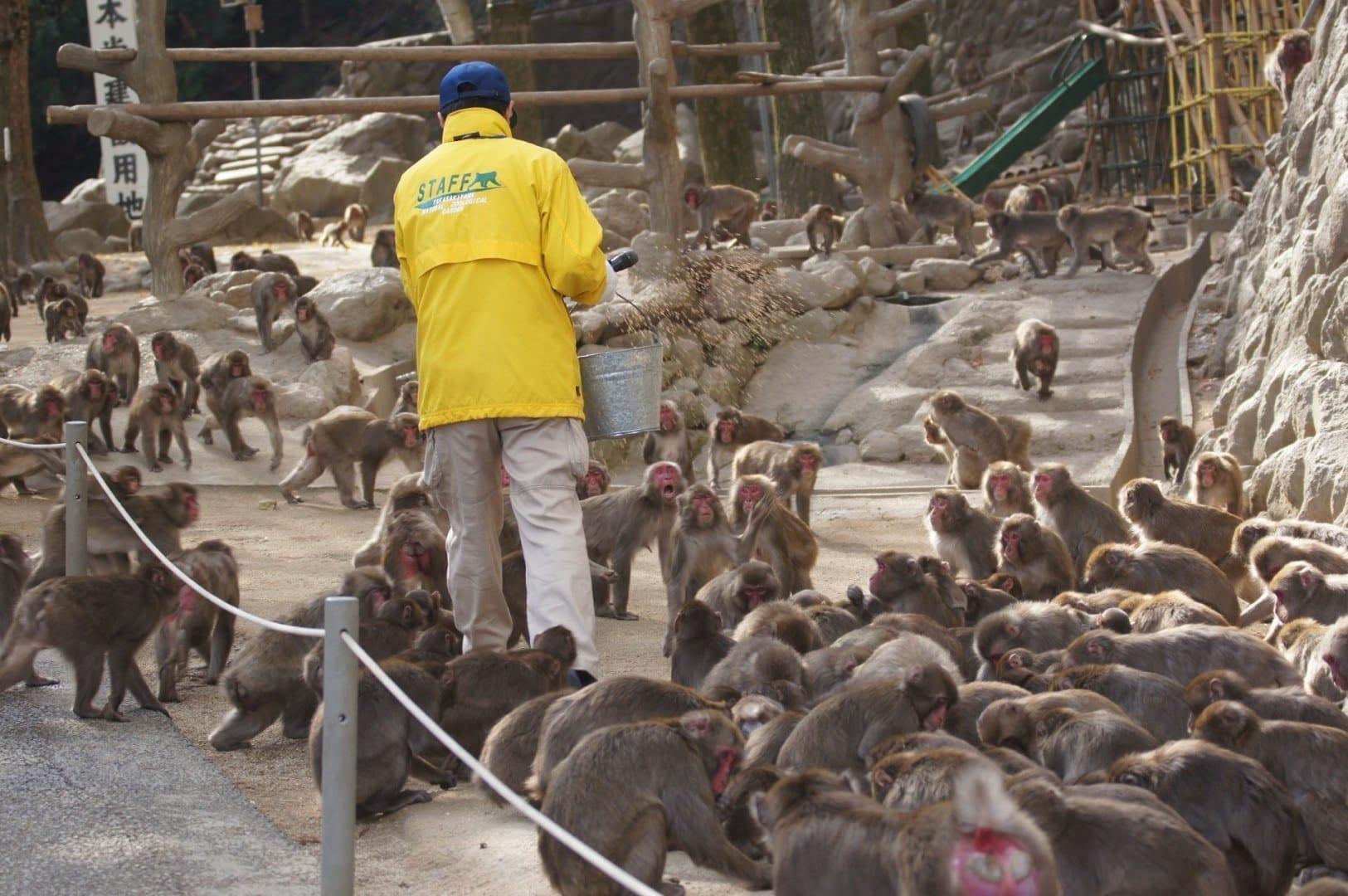 Monos en Takasakiyama Oita Japón