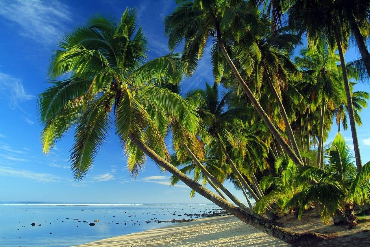 Palmas Playa Tropical Tropicales Brasil