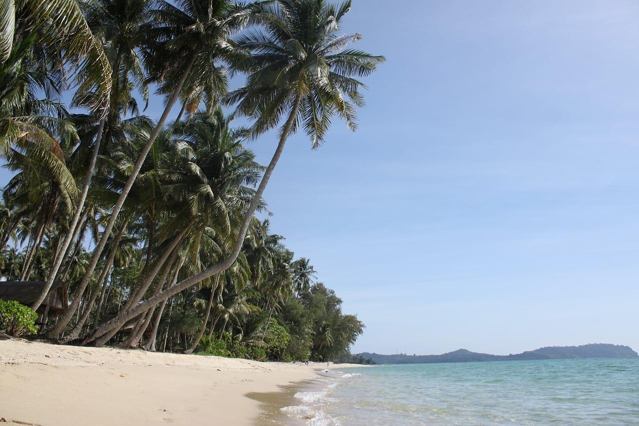 Palmeras La Isla De Koh Kood Tailandia Tailandia