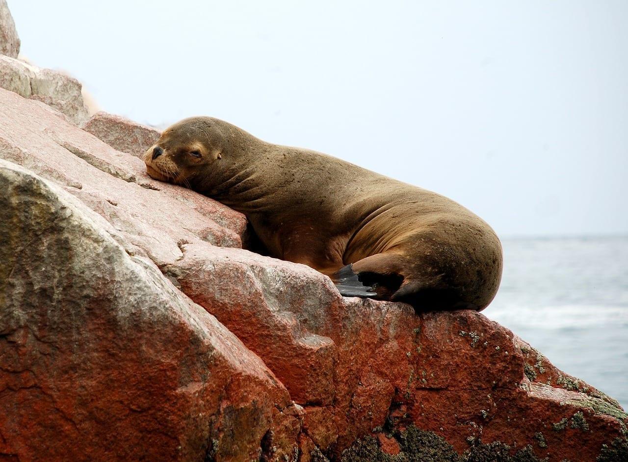 Paracas Peru Islas Ballestas Perú