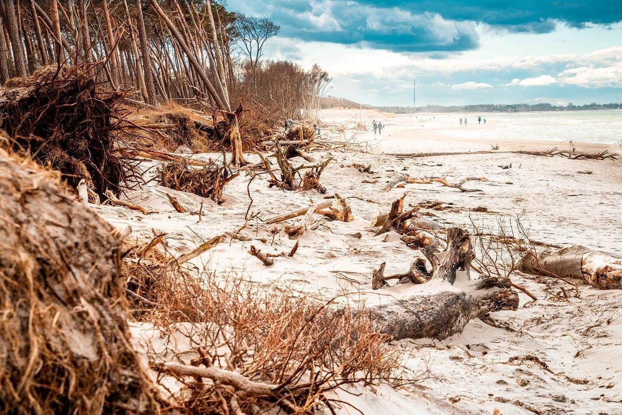 Playa De Poniente Mar Báltico árboles México