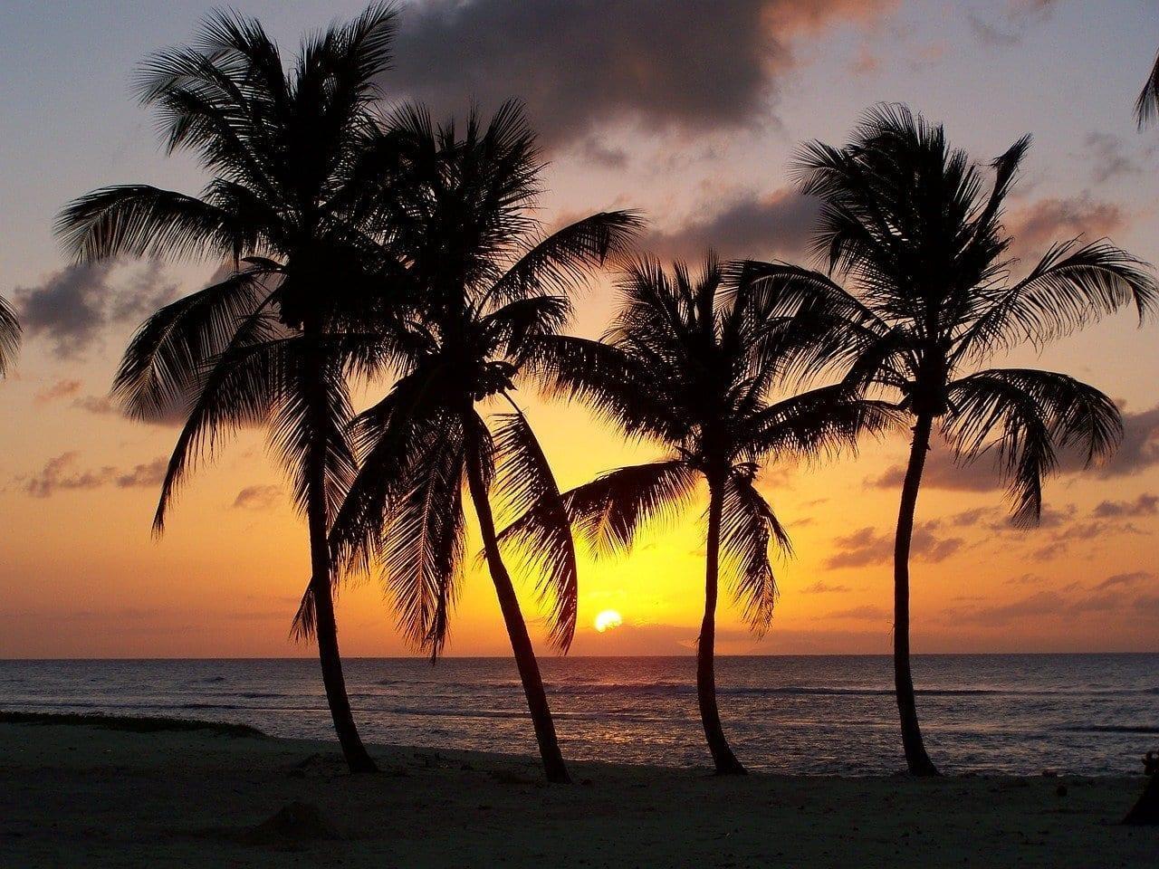 Playa Guadalupe Anse Bertrand España
