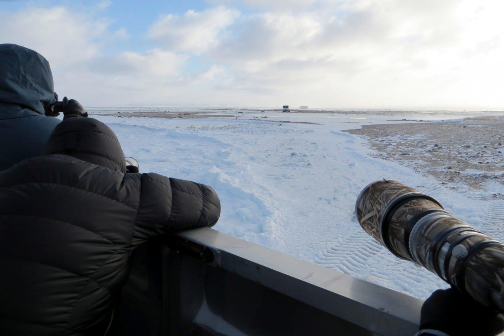 Preparen sus cámaras, fotografía de osos polares desde la parte trasera de un Tundra Buggy Churchill Canadá
