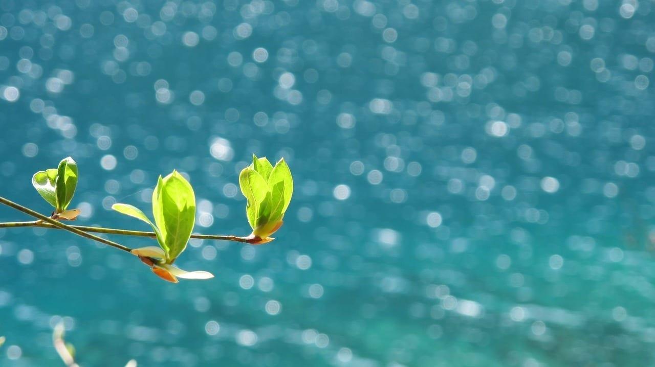 Primavera Jiuzhaigou Mar China