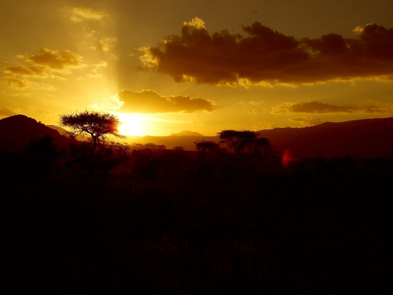 pulgar Tsavo East National Park Kenia