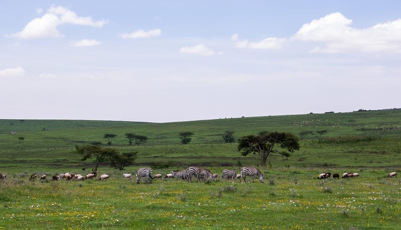 área De Conservación De Ngorongoro Tanzania Naturaleza Tanzania
