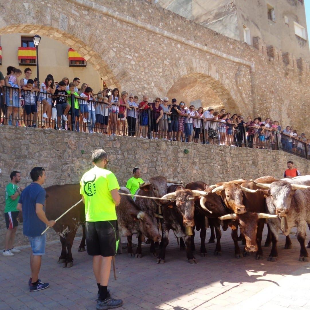 Recogiendo los toros en la C/ Argén, cerca de la Torre del Verdugo Segrbe España