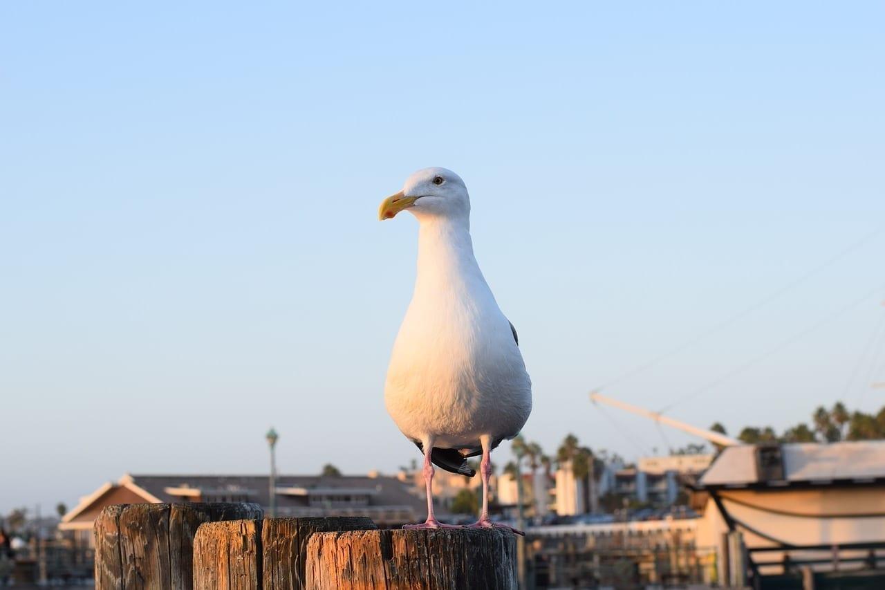 Redondo Beach California Gaviota Portugal