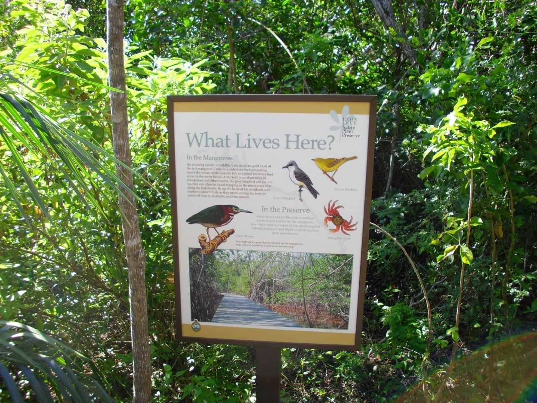 Reserva de plantas nativas de Leon Levy Eleuthera Bahamas