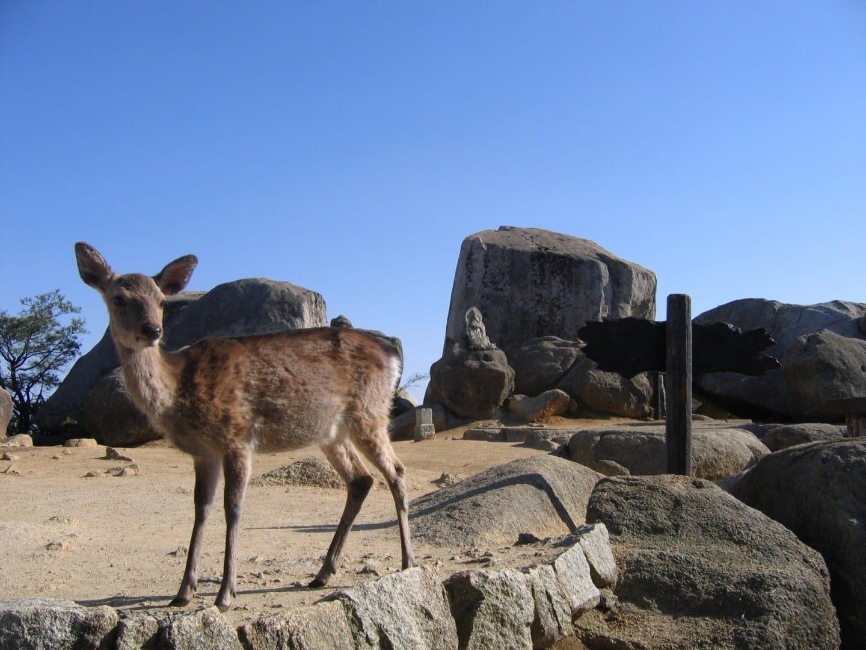 Salir a caminar por el Monte Misen Miyajima Japón