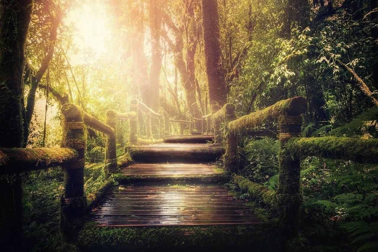 Selva De Distancia árboles Italia