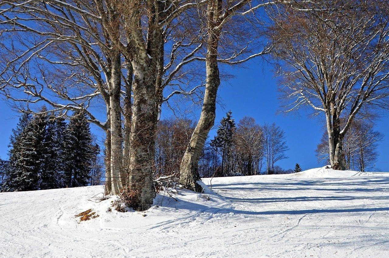 Selva Negra Pista De Esquí Kinderhügel Alemania