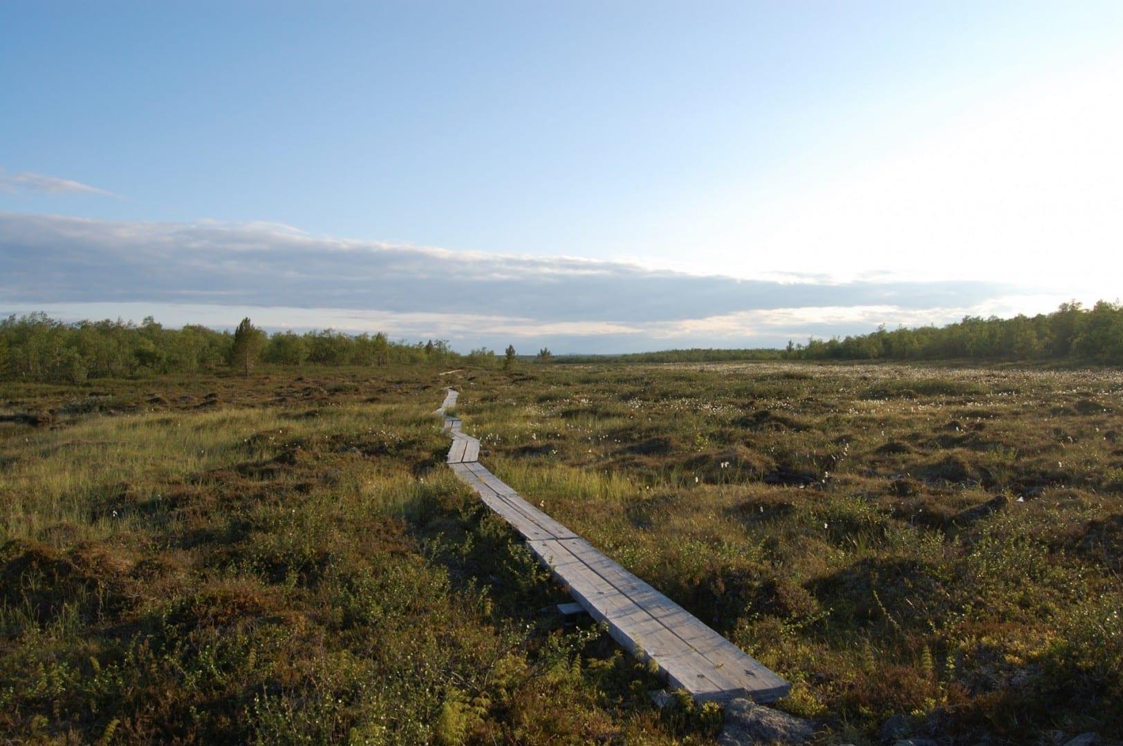 Tablas de pato a través de un pantano. Saariselka Finlandia