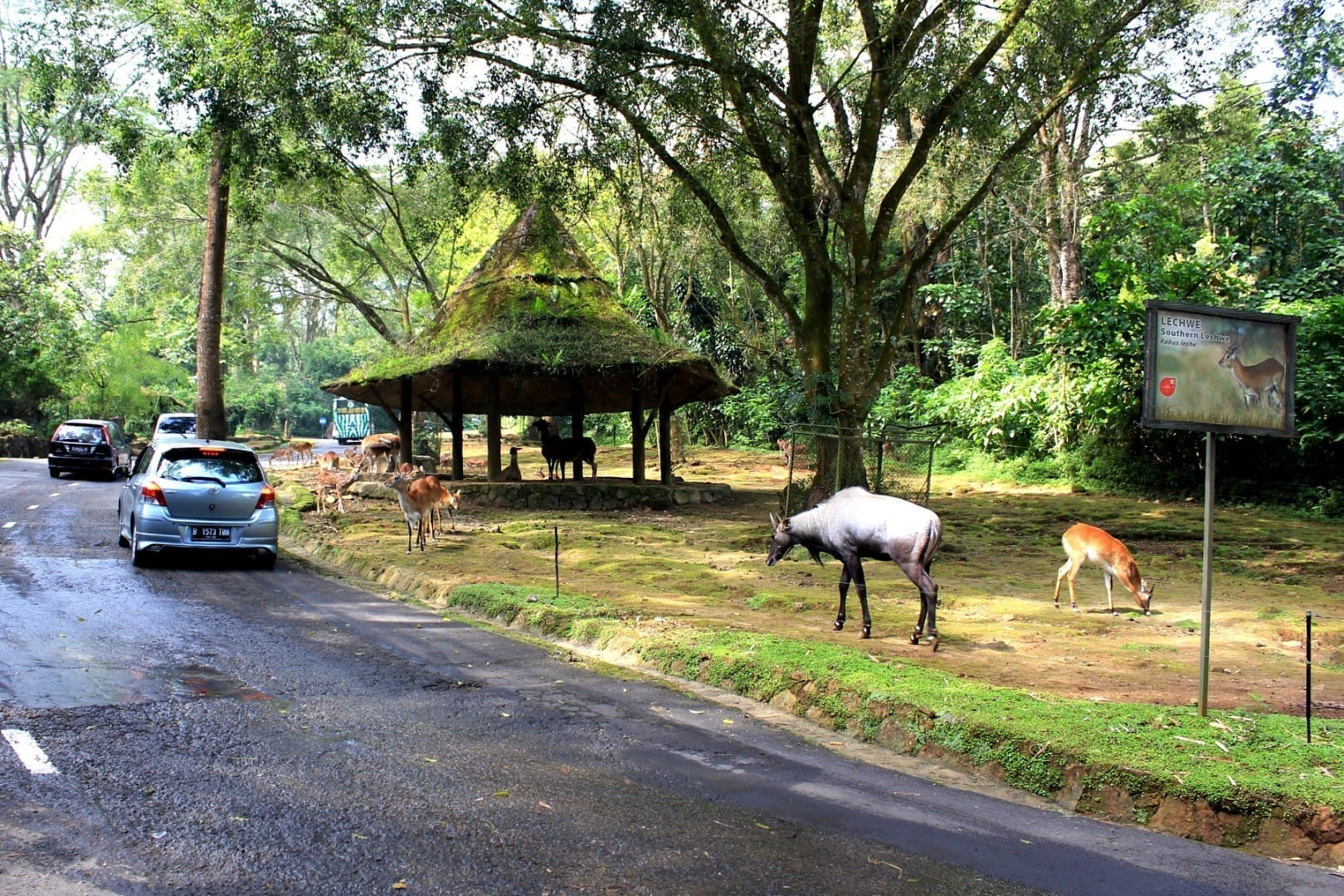 Taman Safari Indonesia. Puncak Indonesia