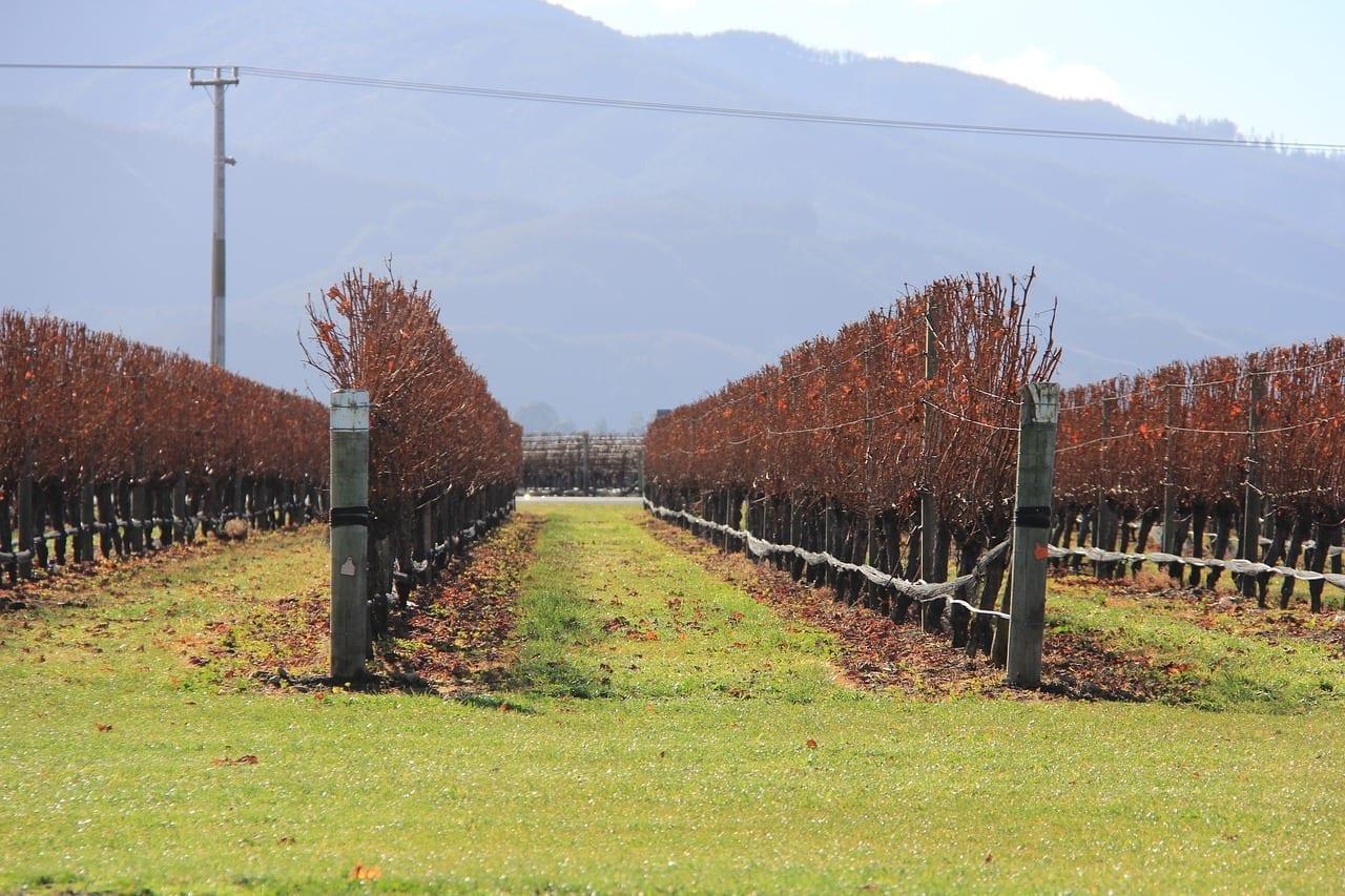 Viña Blenheim Nuevo Nueva Zelanda