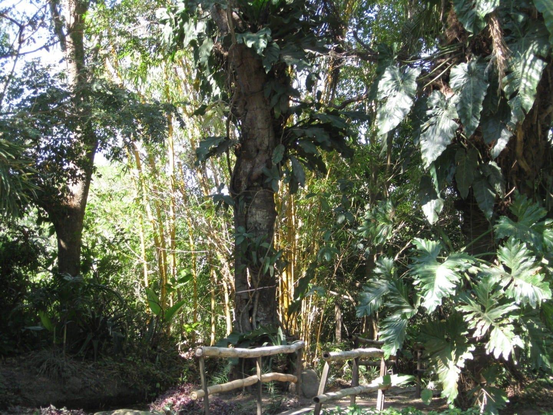 Yvaga Guazu park Santa Cruz de la Sierra Bolivia